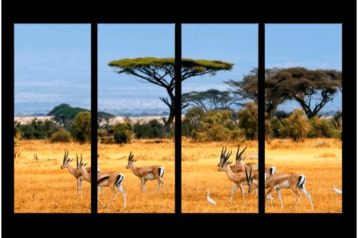 Модульная картина Антилопы в саванне